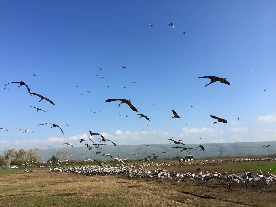 birds2 por Erez Naveh