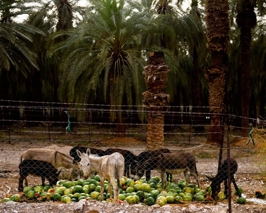 Havatiah por Nir Barav